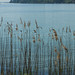 flower Island, lake, Mainau-66