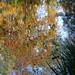 Berge d'automne
