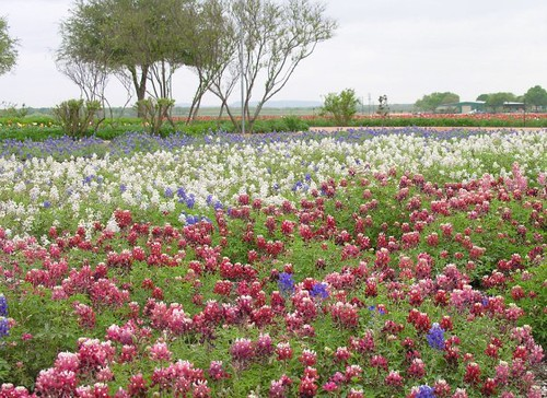 The Beauty of Wildflowers courtesy of Wildseed Farms