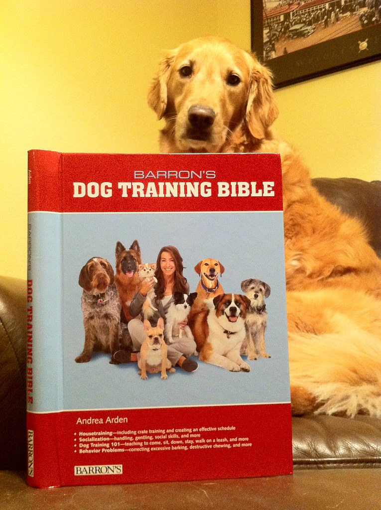 Arden Dog Training Club Solihull