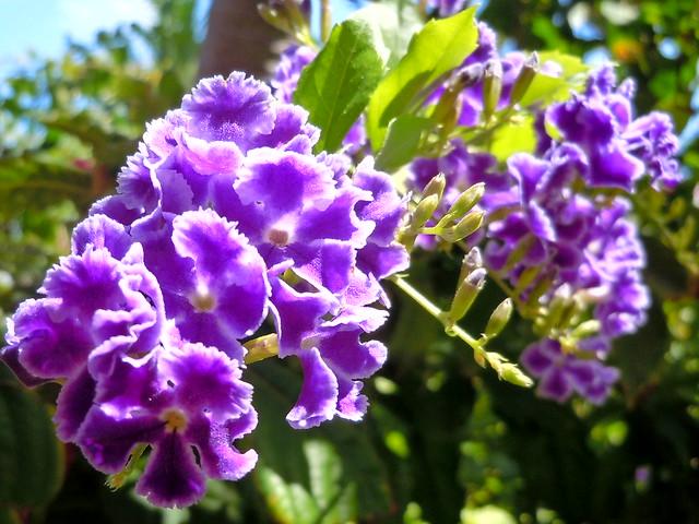 Caribbean Flowers: Flickr - Photo Sharing