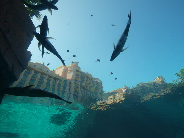 Bahamas Nassau Atlantis Aquarium Flickr Photo Sharing
