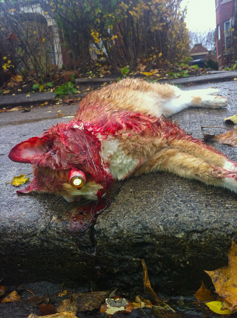 Bloody Eye In Dog Worsens With Activity