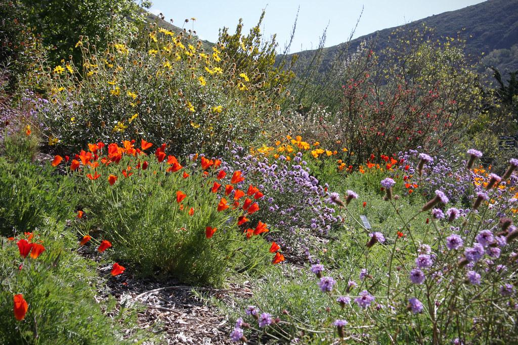 Leaning Pine Arboretum California Native Landscape Flickr