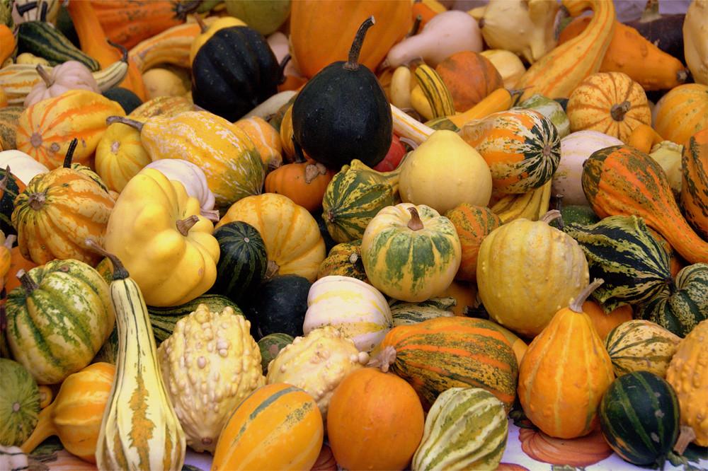 calabazas ornamentales variadas m s informaci n en www On calabazas ornamentales