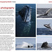 The Art of Photographing Wildlife book sample page 3