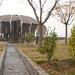 Jinhua - Ancient Tree (1)