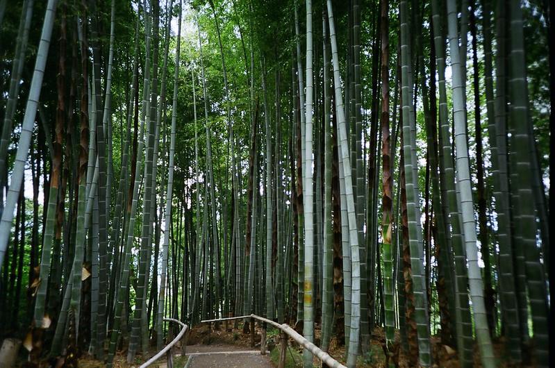 京都:竹林 / 高台寺