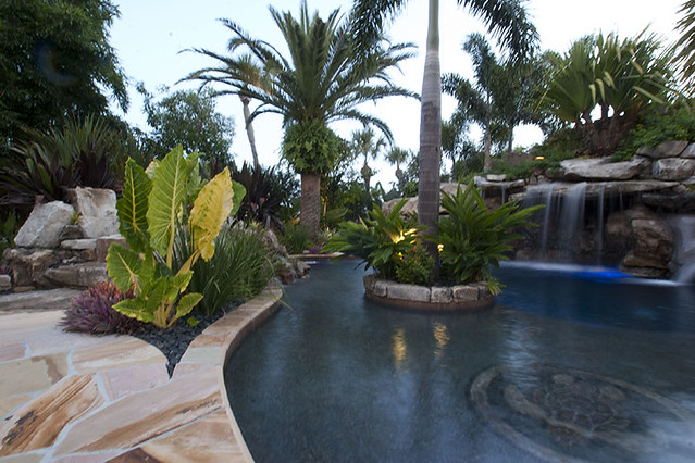 Landscaping swimming pool tropical plants sarasota for Flowers around swimming pool