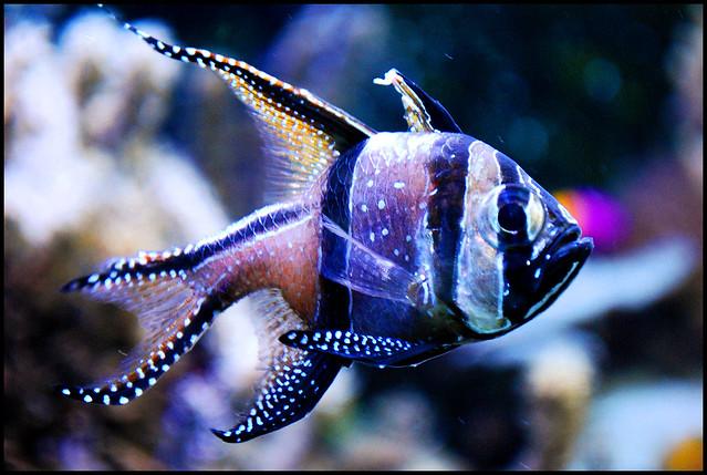 Come pesci d 39 acqua dolce ci sono momenti in cui ti for Allevamento pesci acqua dolce
