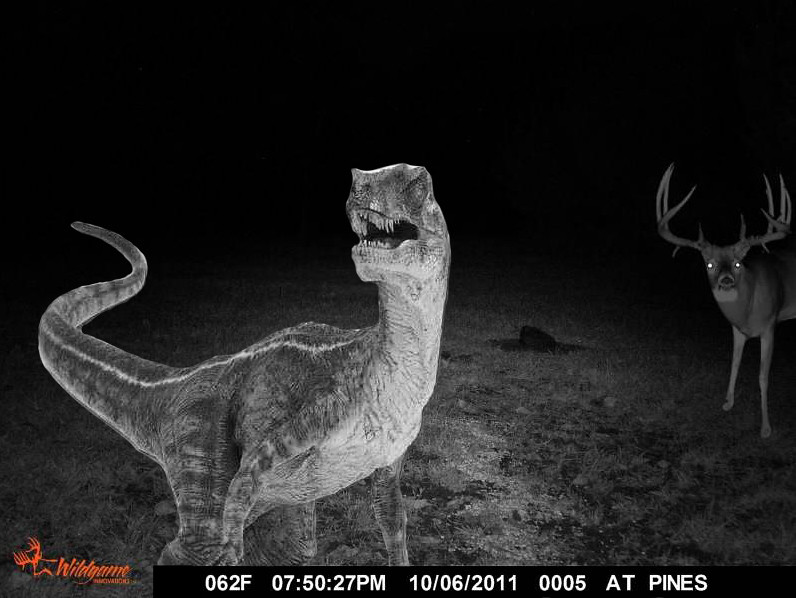 Trail Cam  Ive Decided To Give Up My Deer Lease If -8909