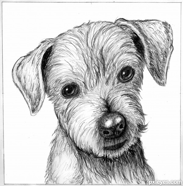 Line Drawing Of A Dog S Face : Drawing picture dog s sketch ranked in