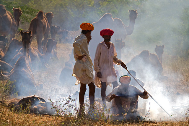 Pushkar Camel Fair with Tribal Tour of Gujarat, Rajasthan & Taj Mahal