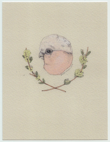NEW postcard in my shop | by Sarah McNeil