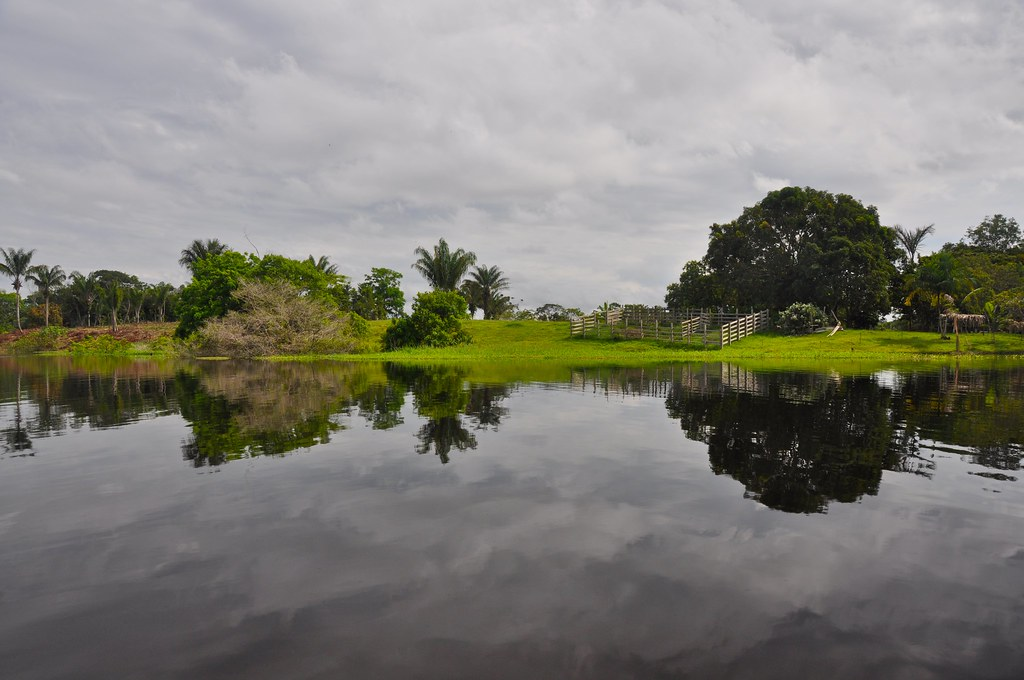 amazonian symmetries i this pic was taken from a small