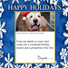 Elizabeth Warren's holiday card (with Otis!)