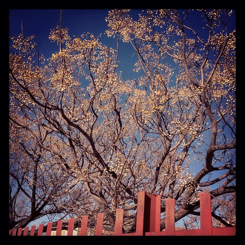 Beautiful tree behind red fence | by susivinh