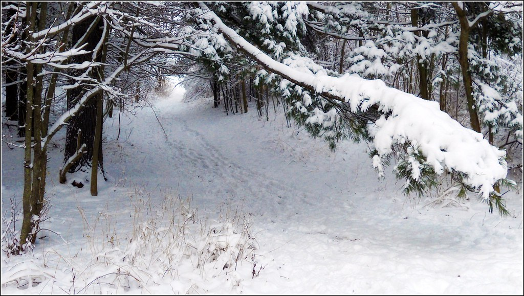Winter Snow Path Winter Snow Path This Is A Hiking Path