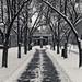 Snowy Saturday [21/366]