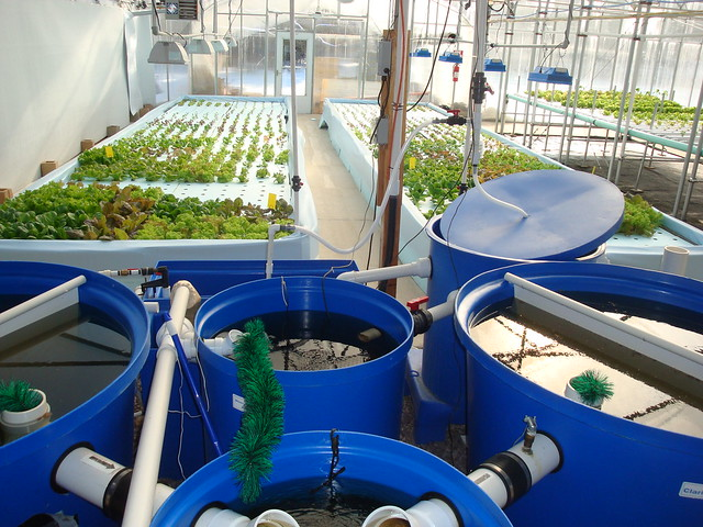 Nelson And Pade Clear Flow Aquaponics System Flickr