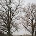 Trees 33505