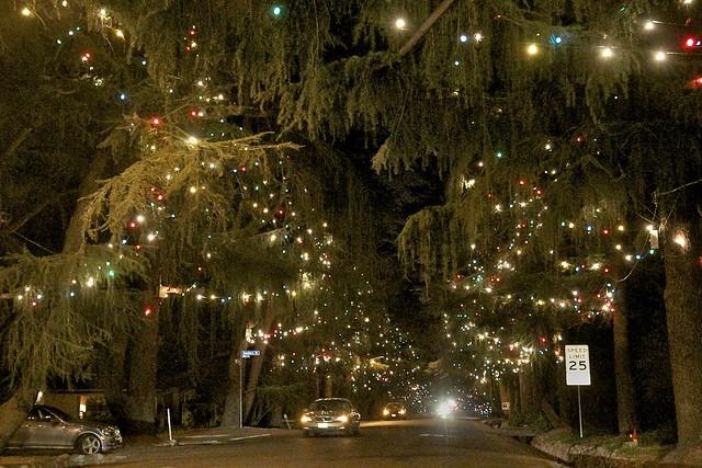 Christmas tree lane flickr photo sharing