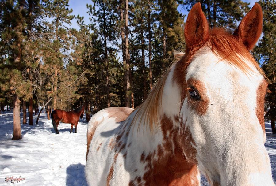 Horse you - Magazine cover