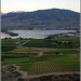 Rows of Fruit on the hills of Lake Osoyoos