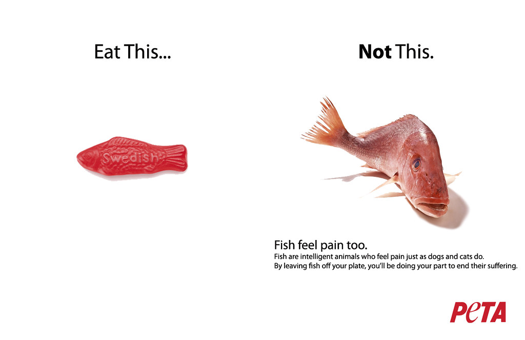 Eat this not that swedish fish white background flickr for Fish not eating