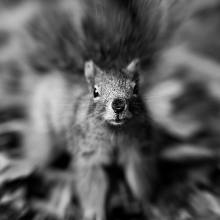 Got Nuts? | by Thomas Hawk