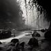 Misty River I