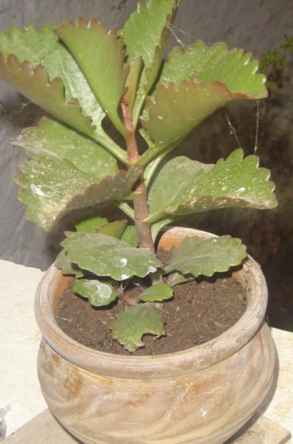 Plante d 39 int rieur plante d 39 int rieur tamaynala flickr - Porte plante d interieur ...