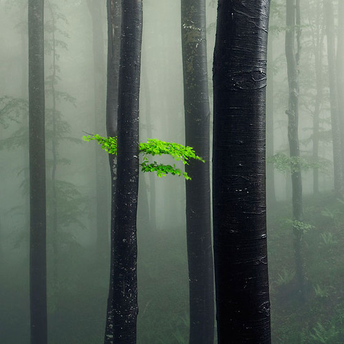 Bit of Green | by Evgeni Dinev