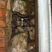 Jar No 352 in situ