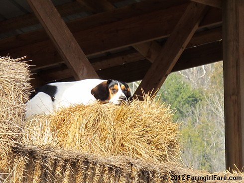 Beagle break 1 | by Farmgirl Susan