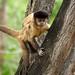 Macaco-prego_2012  28073