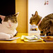 """good dream, maybe (at """"Cats' conference"""", Kyoto)"""