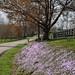 Spring Phlox, Old Frankfort Pike, KY