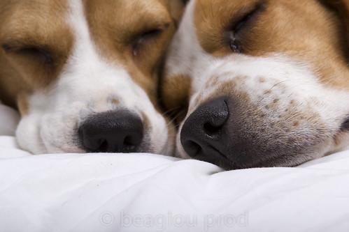 Tι σας στέλνουν τα δύο Beagles;