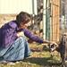 Petting a Lamb