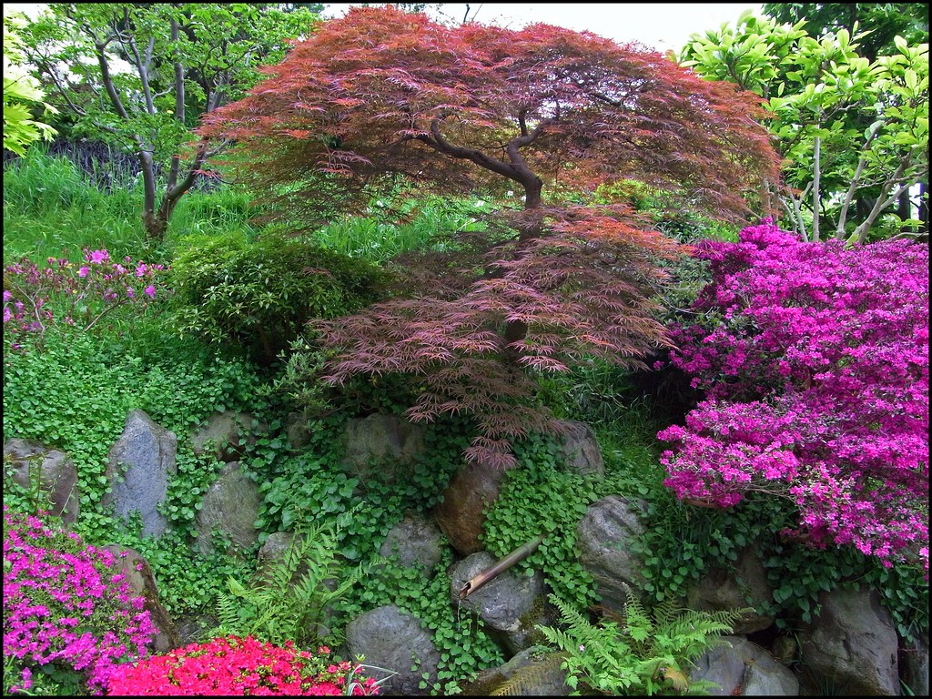 Jardin japonais jardin anglais jardin fran ais for t bl for Jardin foret