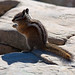 Chipmunk on Angels Landing