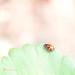 Little lady {34/366}