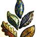 art nouveau leaves (new mokume gane technique)