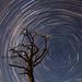 Starry Tree of Light