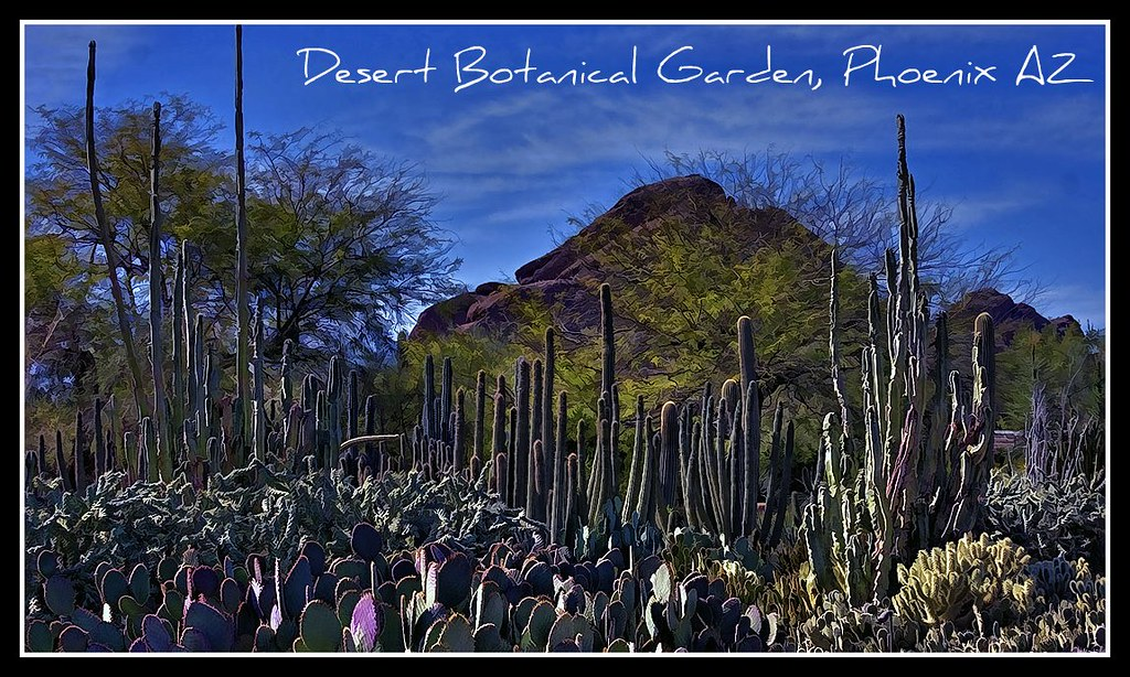 Desert Botanical Garden Phoenix Az Mg 5684 5 6 7 9pt