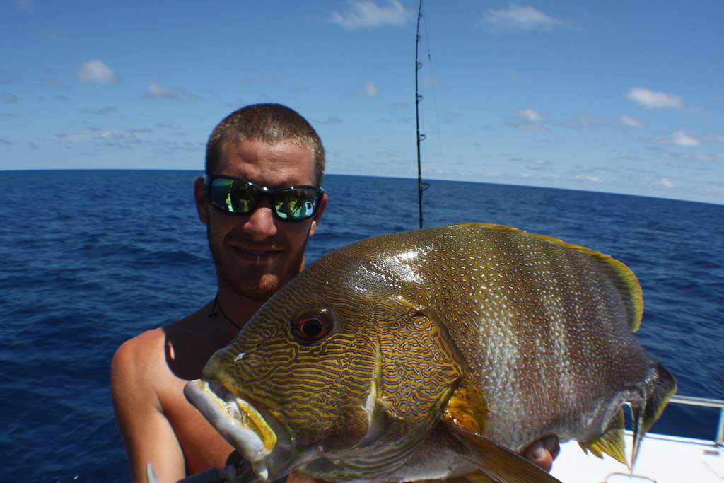 Maori sea perch great times on this recent 5 day timor for Sea perch fish