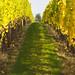 Quailhurst Vineyard Estate_MG_7031