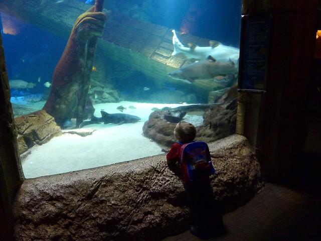 Indoor Aquarium In Long Island