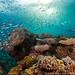 blue reef underwater